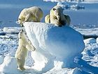 Cruise along with Arctic wildlife